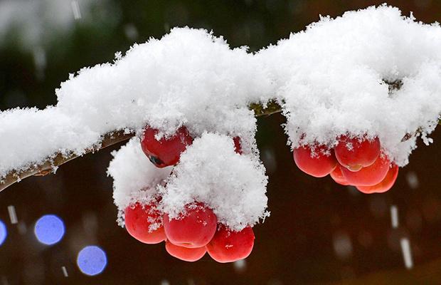 Какой будет ростовская зима: прогноз синоптиков и экстрасенса