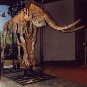 Фото №1 - Скелет в шкафу Christie's