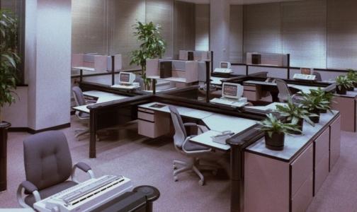 Фото №1 - Офисные растения берегут здоровье