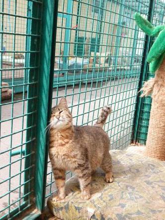 Фото №3 - Котопёс недели: кошка Дороти и собака Морковка