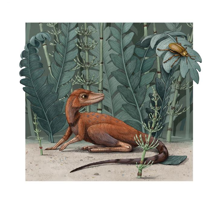 Фото №1 - Обнаружен крошечный древний родственник динозавров и птерозавров