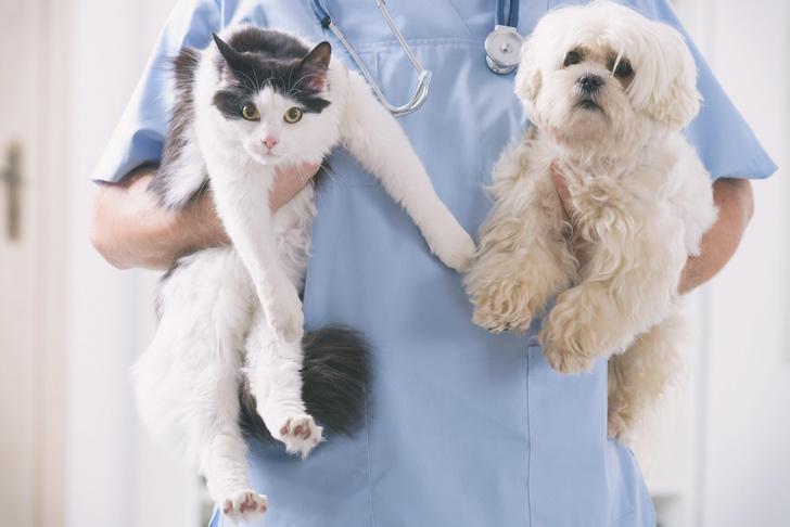 Фото №1 - Зарегистрирована первая в мире вакцин против коронавируса для животных