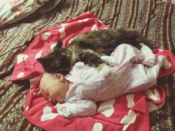 Фото №3 - Ребята и зверята: почему нельзя разрешать детям спать вместе с питомцем