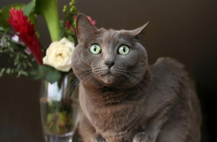 Фото №1 - Специалисты объяснили, почему кошки все опрокидывают
