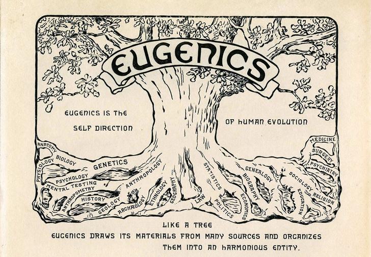 Фото №3 - Как человечество себя из себя выводило: история евгеники