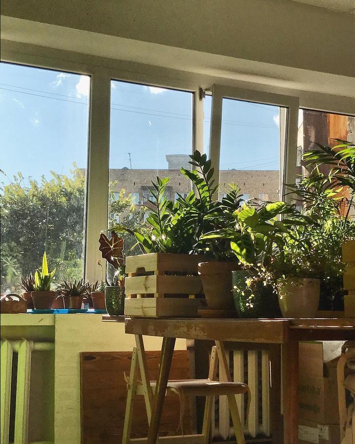 Фото №5 - Все, что нужно знать о пересадке комнатных растений
