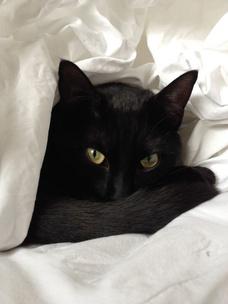 Фото №2 - Тест: Выбери черного котика и получи предсказание от Сабрины Спеллман