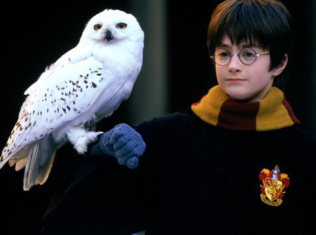 Фото №9 - 10 фактов о Джоан Роулинг и Гарри Поттере