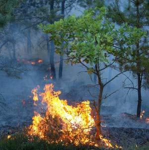 Фото №1 - На Алтае начались лесные пожары