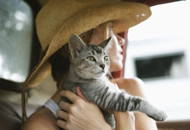 Фото №3 - Как стать счастливой: 12 мудрых советов от вашего кота