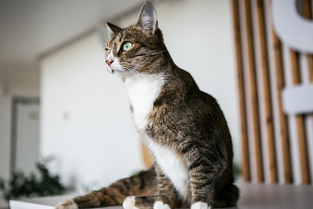Фото №5 - Эти котики и песики ищут хозяев!