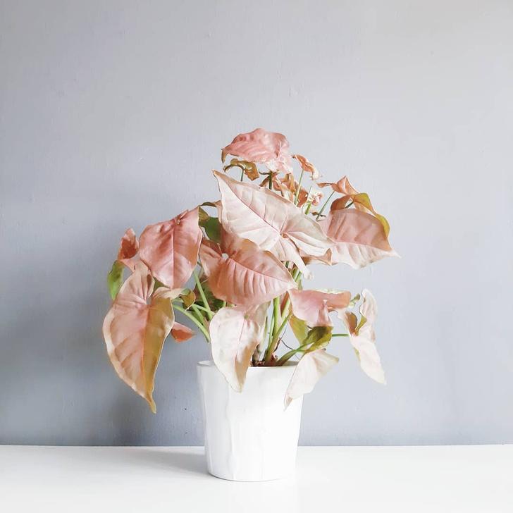 Фото №6 - Тренды 2020: самые модные комнатные растения
