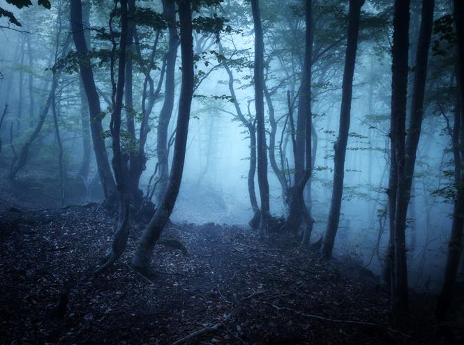 Фото №3 - «Карантинные сны»: почему нам всем стали сниться кошмары и бессмыслица