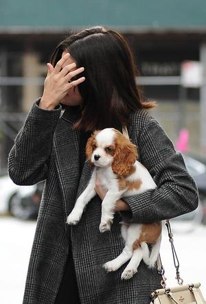 Фото №7 - Доброе сердце: Меган Маркл, Джордж Клуни и другие звезды, взявшие собаку из приюта