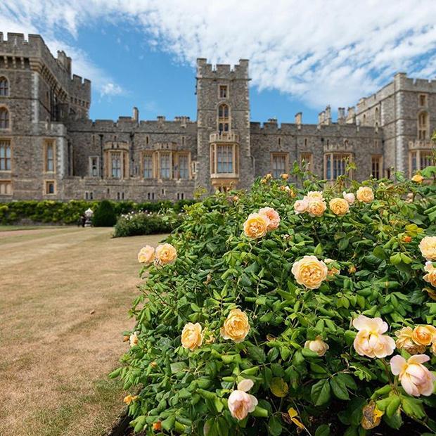 Фото №3 - Елизавета II открывает свои частные сады для публики впервые за 40 лет