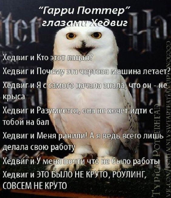 Фото №5 - Лучшие шутки и анекдоты про Гарри Поттера
