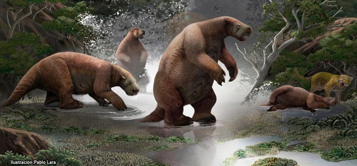Фото №1 - В Эквадоре нашли останки гигантского ленивца