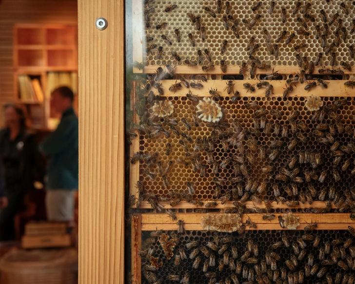 Фото №5 - Дом для пчел на территории отеля в Сомерсете