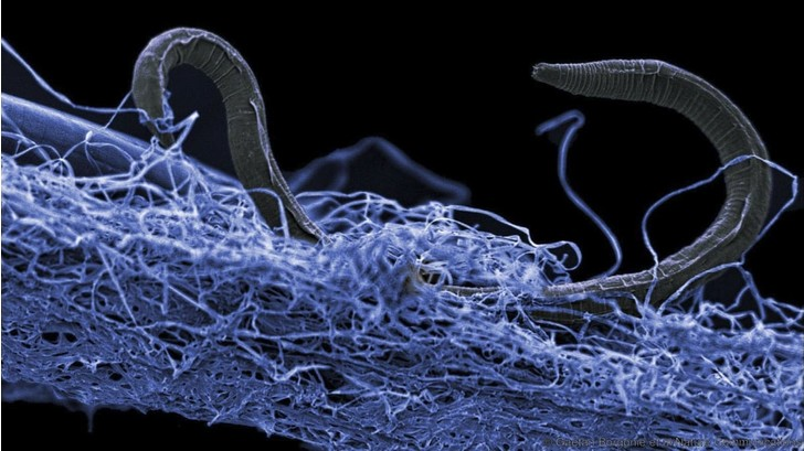 Фото №1 - Подземная биосфера оказалась в два раза больше Мирового океана