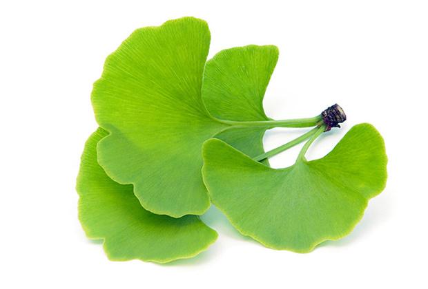 Фото №8 - Самые полезные лекарственные травы