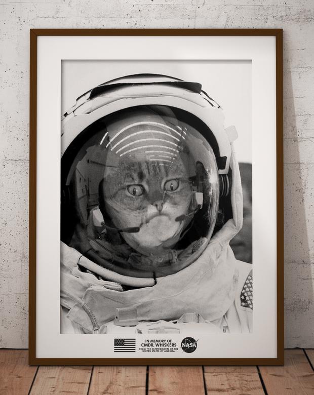 Фото №6 - Лучше фотожабы на кота в защитном воротнике