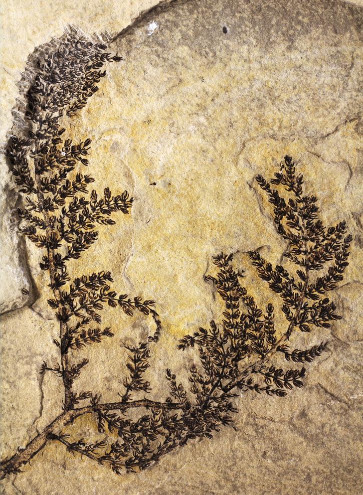 Фото №1 - Найдены древнейшие цветы на планете