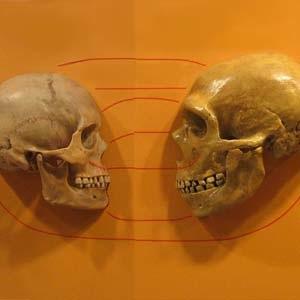 Фото №1 - Диабет — «подарок» неандертальцев