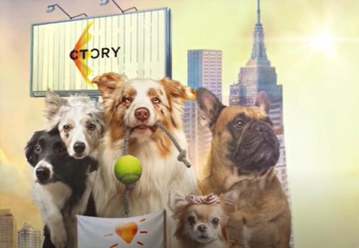 Фото №1 - Вышла серия роликов о том, как правильно завести собаку