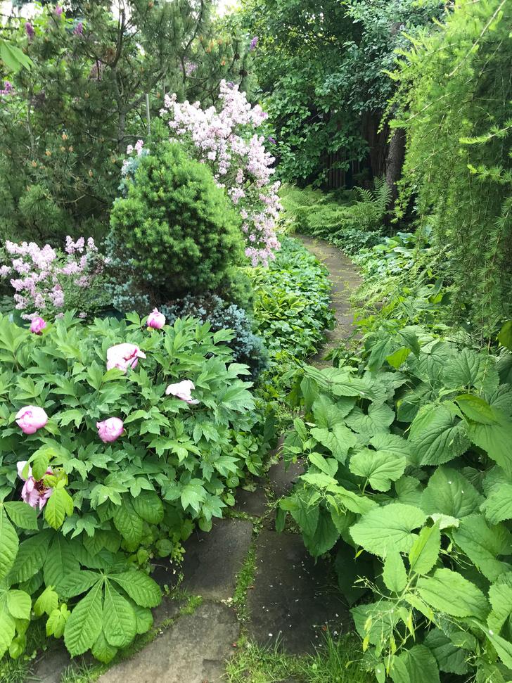 Фото №18 - ELLE DECORATION в саду у дизайнера Ирины Глик