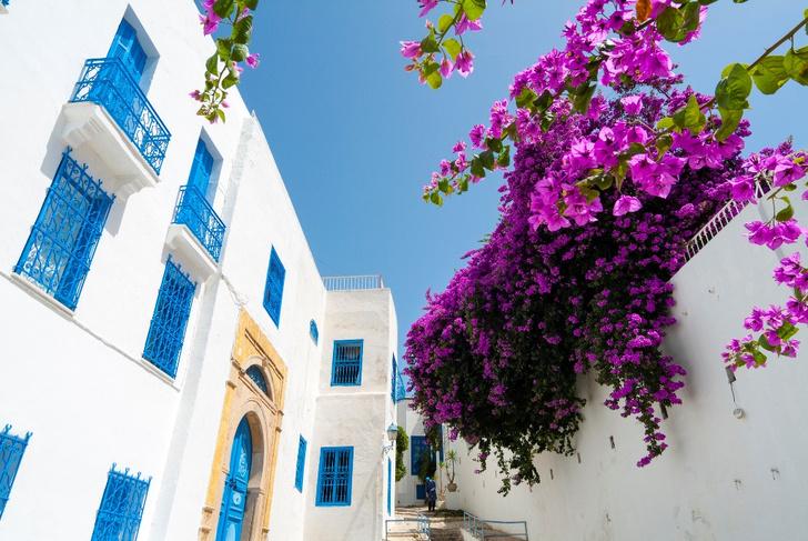 Фото №3 - Жемчужина Туниса: зачем ехать в бело-голубой город Сиди-бу-Саид
