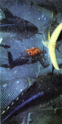 Фото №2 - На пороге «Голубого космоса»