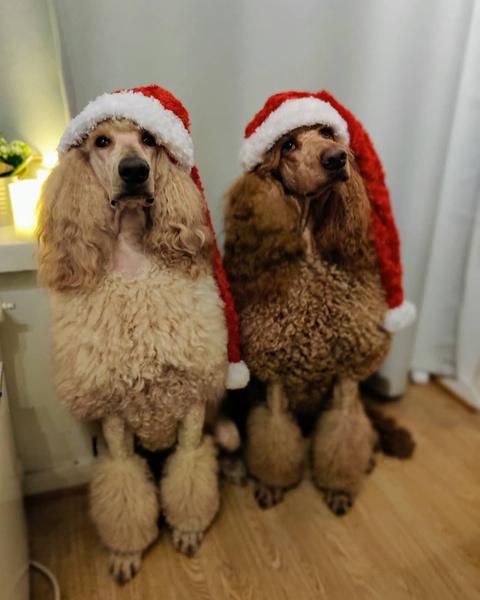 Фото №20 - Если собака без поводка: 15 фото песиков до и после прогулки