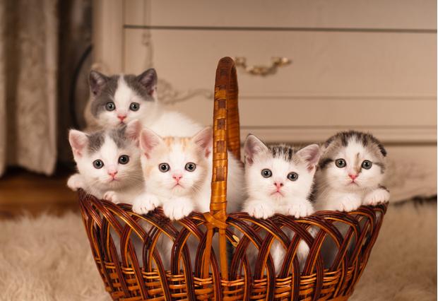Фото №1 - Работа мечты: вам платят за жизнь в Греции и заботу о котиках