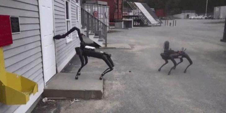 Фото №1 - Американская полиция начала использовать робопсов Boston Dynamics