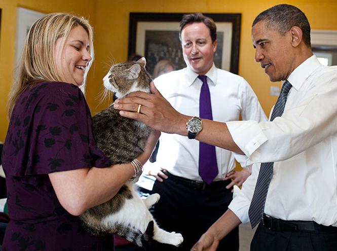 Фото №4 - Коты на службе Ее Величества