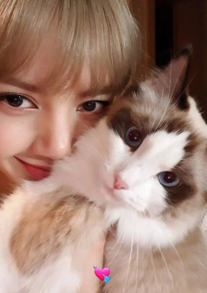 Фото №6 - BLACKPINK и котики: 8 фото Лисы, на которых хочется забрать обоих себе 😍