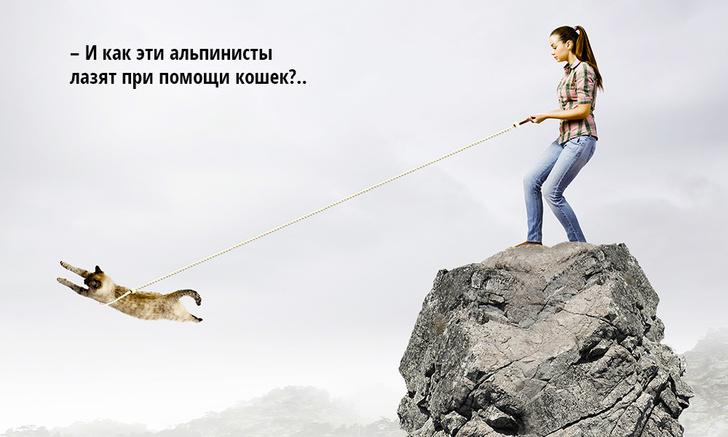 Фото №1 - Как поймать сбежавшее животное: кошка, собака, попугай