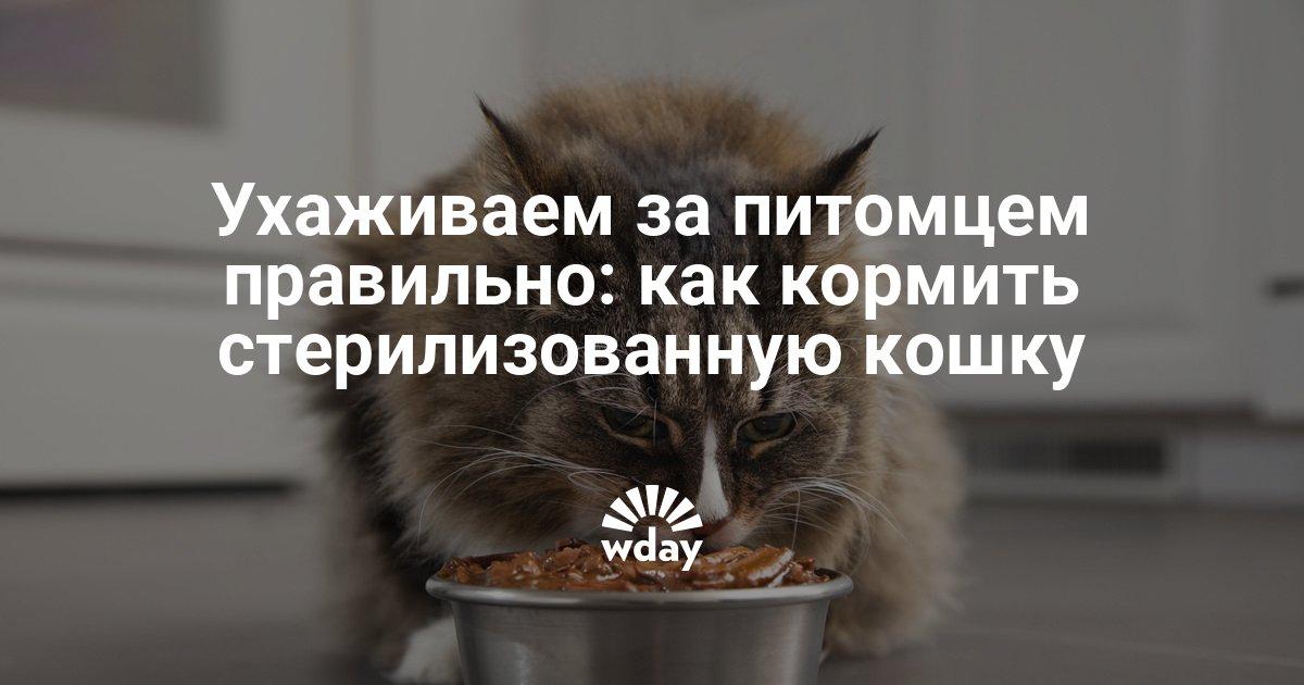 Чем кормить стерилизованную кошку или кота: особенности питания