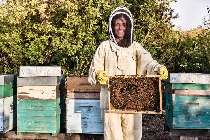 пчелы построили улей прямо в стенах дома