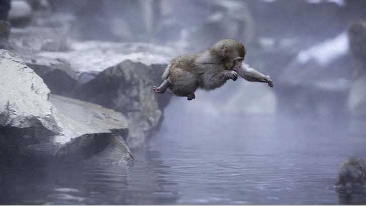 Фото №1 - Парк снежных обезьян