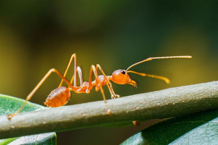 Фото №1 - Развеян миф о том, что все муравьи — трудоголики