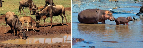 Фото №5 - Жемчужина Танзании