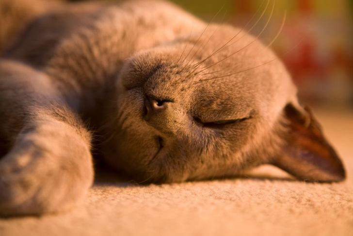 Фото №1 - Почему кошки так много спят?