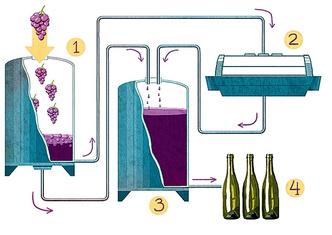 Фото №12 - Как французы делают божоле нуво и почему не пьют его сами