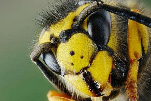 Фото №4 - Как защитить ребенка от летних насекомых