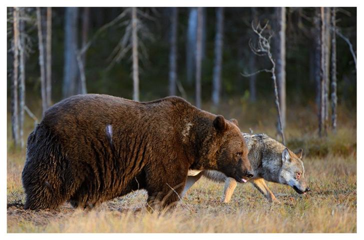 Фото №4 - ВОКРУГ СВЕТА - партнёр фотовыставки «Лесные истории»