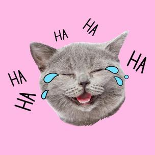 Фото №8 - Тест: Выбери мартовского котика и узнай, сколько человек безответно в тебя влюблены