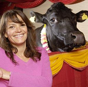 Фото №1 - Британские ветеринары хотят убить индуистского быка