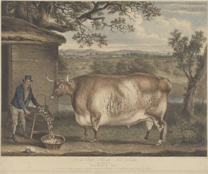 Фото №3 - Почему в XIX веке фермеры заказывали парадные портреты своих толстых коров, свиней и овец