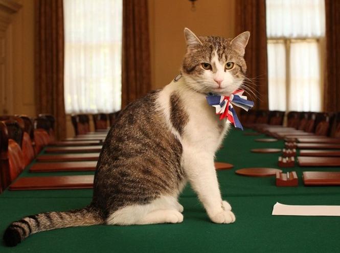 Фото №2 - Коты на службе Ее Величества